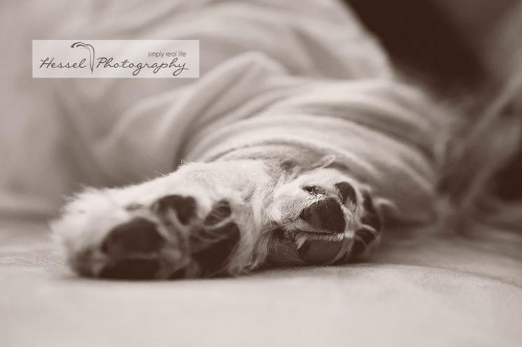 midland tx  llifestyle newborn photographer