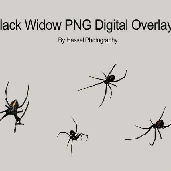 Black-Widows