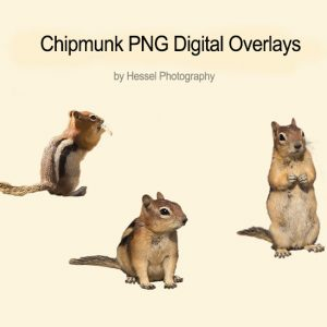 Chipmunk-watermark