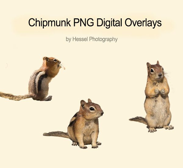 Chipmunk-watermark