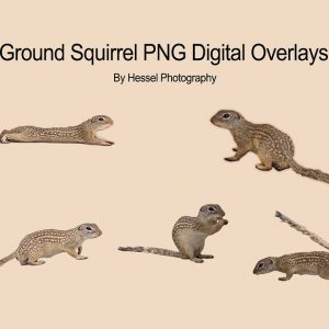 Ground-Squirrels