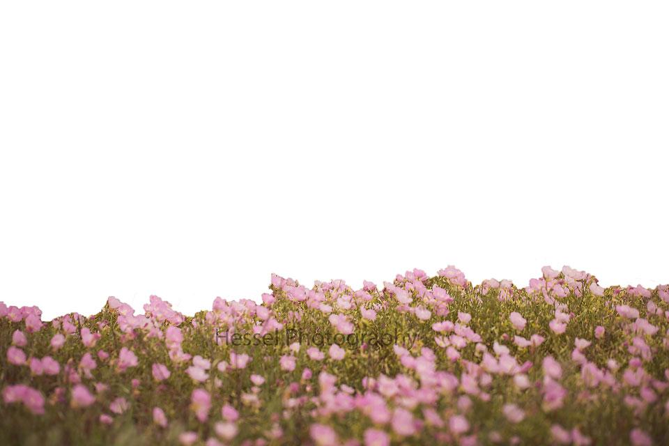 Pink flower field digital backdrop pink flower field overlay watermark mightylinksfo