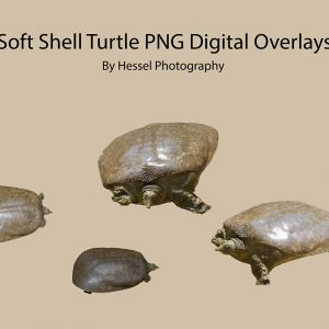 Soft-Shell-Turtle-watermark