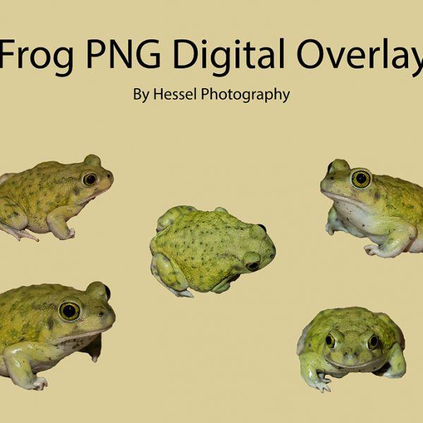 green Frog-watermark