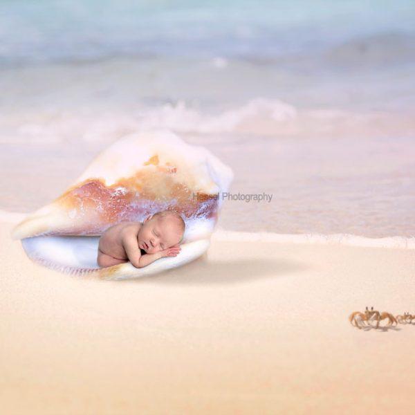 shell-baby-watermark