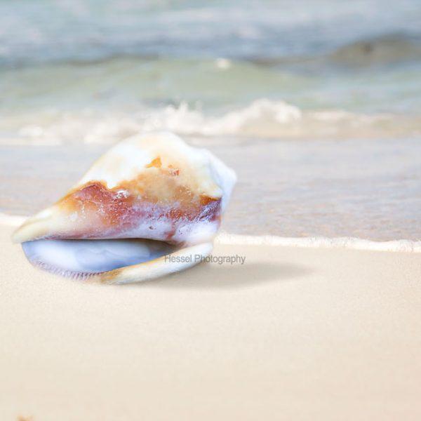 shell-watermark