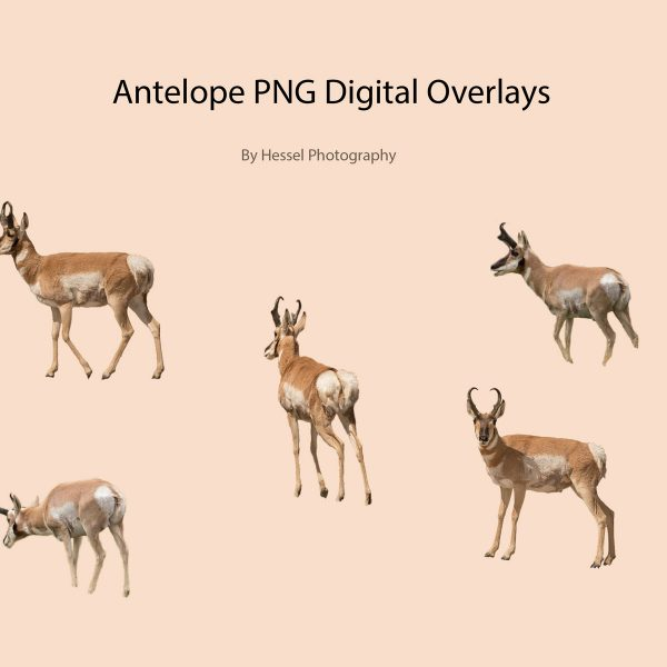 png overlay antelope
